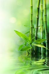 Fototapeta zen bambusy 134p