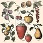 Plakat ogród owocowy