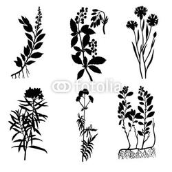Obraz na płótnie canvas dwuczęściowy dyptyk sylwetki roślin leczniczych na białym tle