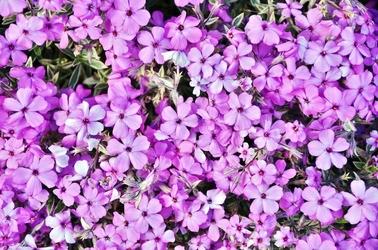 Fototapeta małe kwiaty na sklaniak fp 423