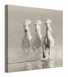 Three White Horses - obraz na płótnie
