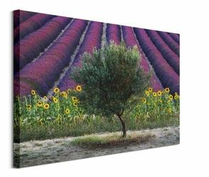 Drzewo Oliwne - obraz na płótnie