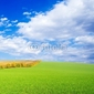 Obraz na płótnie canvas zielone pole, błękitne niebo, białe chmury.