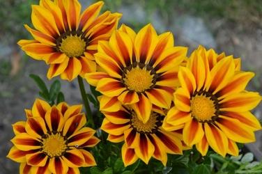 Fototapeta kwiat 377