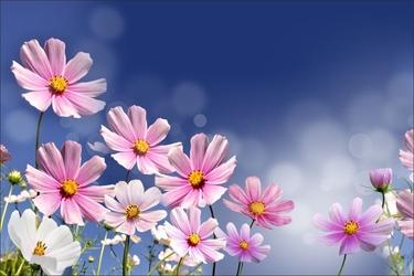 Fototapeta kwiaty 2214