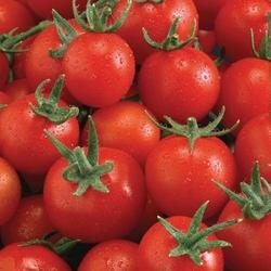Pomidor philovita f1 – cherry – kiepenkerl