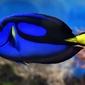 Fototapeta niebieska ryba rafy koralowej fp 2735