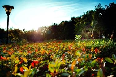 Fototapeta kwiat, łąka 367
