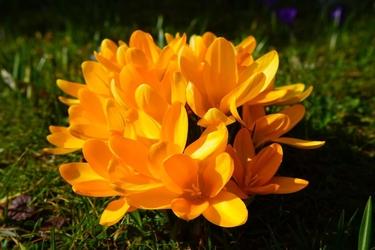 Fototapeta kwiat 376