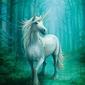 Forest unicorn - plakat