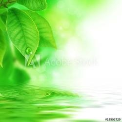 Obraz na płótnie canvas dwuczęściowy dyptyk zielone liście