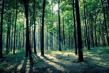 Złoty potok las - plakat premium wymiar do wyboru: 50x40 cm