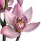 Obraz na płótnie canvas czteroczęściowy tetraptyk kwiat 5a