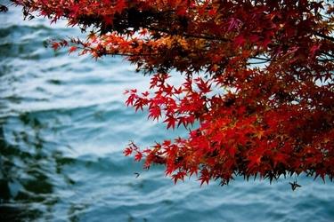 Fototapeta na ścianę czerwone liście na tle jeziora fp 3343