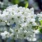 Fototapeta kwiaty wiosny fp 341