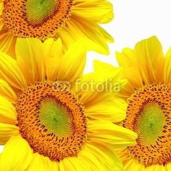 Tapeta ścienna żywe słoneczniki