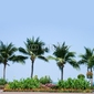 Obraz na płótnie canvas dwuczęściowy dyptyk palmy
