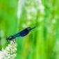 Fototapeta ważka wśród zielonych traw fp 2983