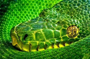 Oczy Węża - fototapeta