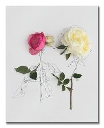 Pink and white roses - obraz na płótnie