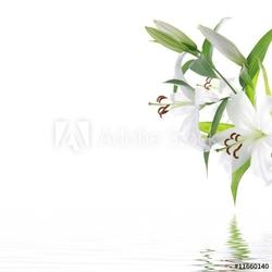 Obraz na płótnie canvas czteroczęściowy tetraptyk biały kwiat lilia - tło wzór spa