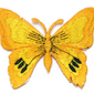 NAPRASOWANKA termo APLIKACJA MOTYL pomarańczowa - 32695
