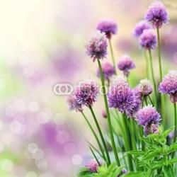 Plakat na papierze fotorealistycznym szczypiorek kwiaty