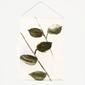 Urban nature culture :: unc dekoracja ścienna leafs