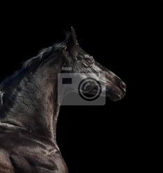 Obraz portret działa koń rasy samodzielnie sportowe