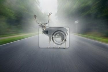 Fototapeta wypadek wildlife