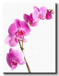 Orchidea - pink - obraz na płótnie
