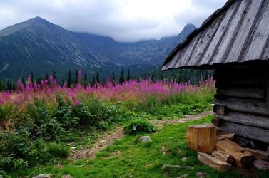 Fototapeta na ścianę różowe kwiaty w górach fp 4812