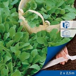 Rukola ruca – nasiona na taśmie – kiepenkerl