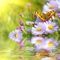 Tapeta ścienna dwa motyle na kwiaty z refleksji