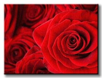 Czerwone róże - obraz na płótnie