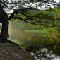 Fototapeta drzewo odbijające się w rzece fp 1392