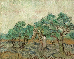 The olive orchard, vincent van gogh - plakat wymiar do wyboru: 29,7x21 cm