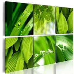 Obraz - soczysta zieleń liści