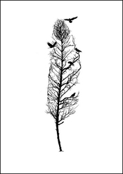 Pióro - plakat wymiar do wyboru: 30x40 cm