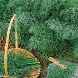 Koper ogrodowy – kiepenkerl