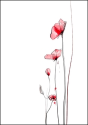 Maki - plakat wymiar do wyboru: 30x40 cm