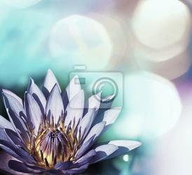 Fototapeta lotos