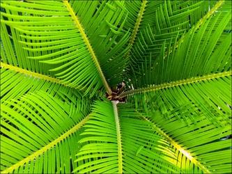 Liść paproci - plakat wymiar do wyboru: 70x50 cm