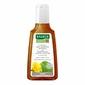 Rausch Huflattich szampon przeciw łupieżowi suchemu