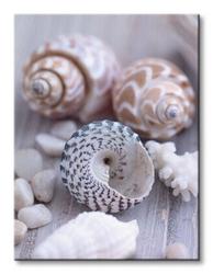 Shells and pebble - obraz na płótnie