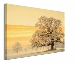 Winter Light - obraz na płótnie