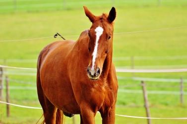 Fototapeta zamyśłony koń fp 2592
