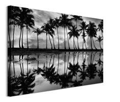 Palm reflection - obraz na płótnie