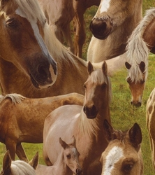 Tapeta konie 293104 kidsamp;teens ii