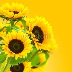 Naklejka samoprzylepna obraz kwiat słonecznika, słoneczniki na żółtym tle